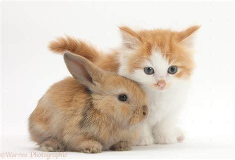 and rabbit baby rabbit picture weneedfun