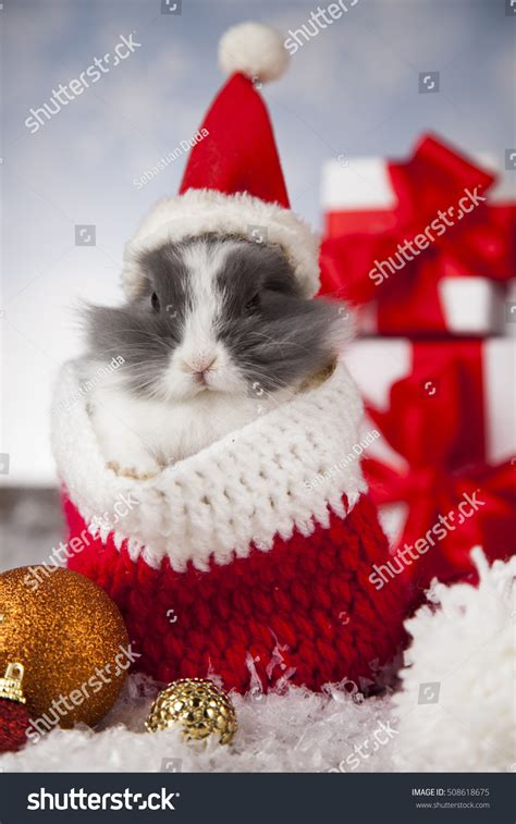 santa hat music box bunny santa hat on stock photo 508618675