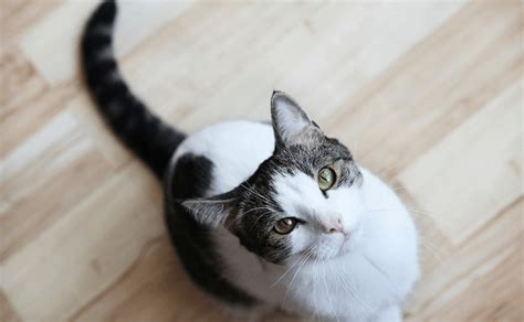 Dust Cat best dust free cat litter reviews low dustless pawsome