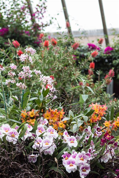 orchid show botanical gardens chicago botanic garden orchid show chicago botanical