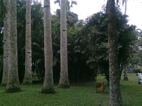 Aburi Botanical Gardens Hotel Carved Tree Picture Of Aburi Botanical Gardens Accra Tripadvisor