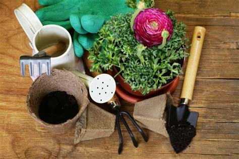 ranunkel pflanzen 187 standort bis bl 252 tezeit