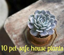keeping your pets safe 10 non toxic house plants aspca