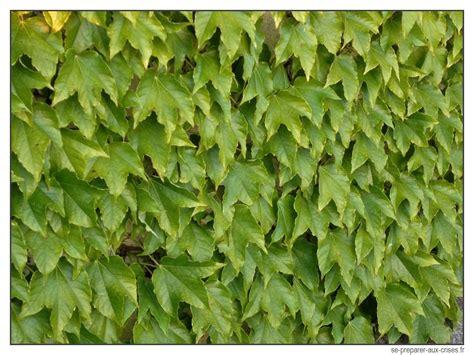Plante Grimpante Pousse Rapide by Le Bouturage Permet De Reproduire Gratuitement Les Plantes