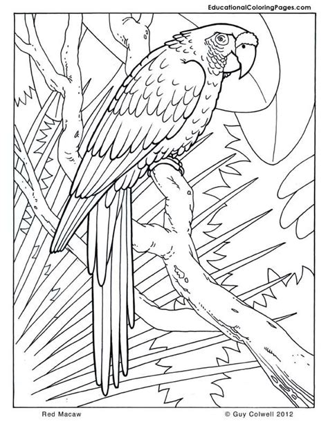 X2 Coloring Page by Macaw Coloring Pages Birds Coloring Jungle Animal