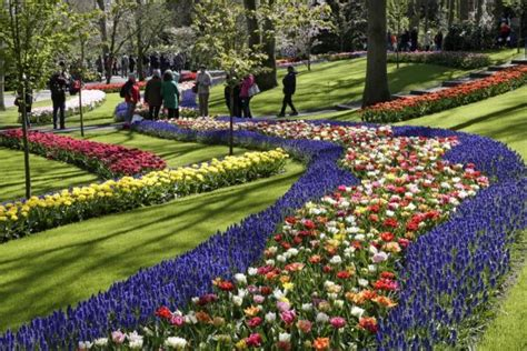 giardini di keukenhof olanda i tulipani dei giardini keukenhof tgcom24