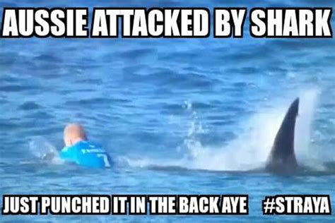 Shark Attack Meme - aussie attacked by shark funny meme