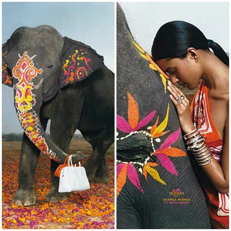Hermes Home Decor by Decorated Indian Elephants Hermes Ad Campaign Paint