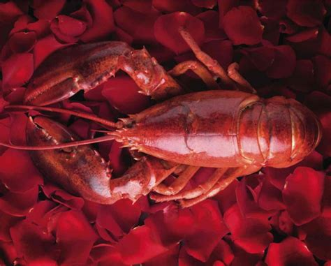lobster valentines day s day special at the lobster trap the lobster trap