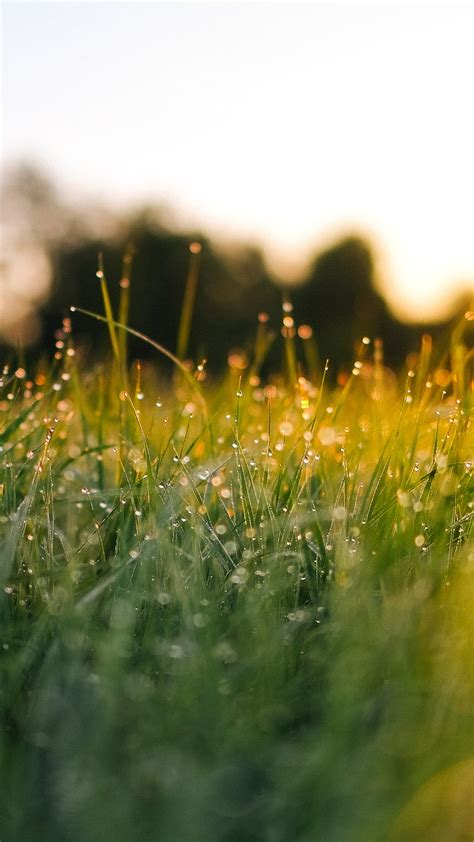 papersco iphone wallpaper nm lawn green nature
