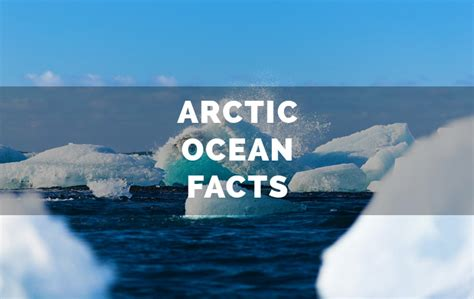 arctic ocean facts   continents   world