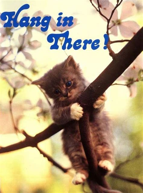 Hang In There Cat Meme - hang in there cat blank template imgflip