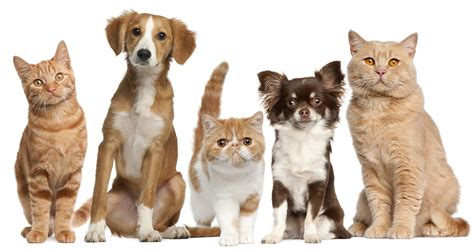 images of puppies and kittens driggs veterinary clinic veterinarian in driggs id usa and cat rabies and