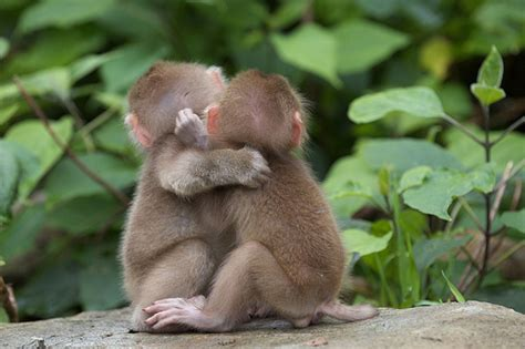 animal hugging pictures  pics amazing creatures