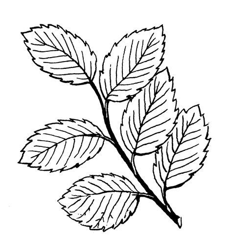 Tembakau Rawing file alternately psf png wikimedia commons