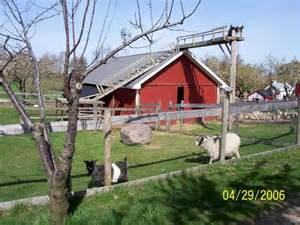 animal barn spicer orchards