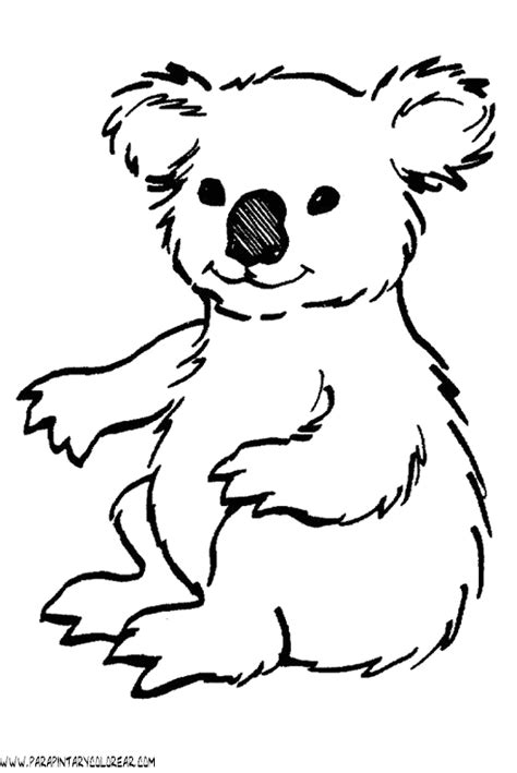 dibujos para colorear koala koala dibujo animales imagui