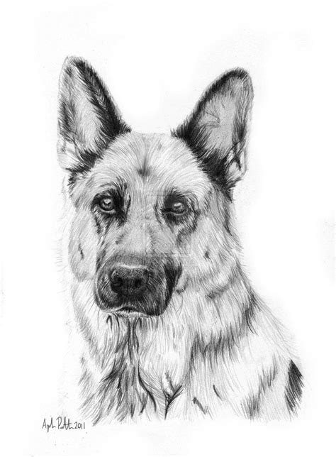 how to draw a german shepherd learn to draw a german shepherd puppy step by step easy for beginners rock draw