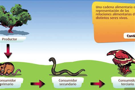 cadenas alimentarias y sus elementos eslab 243 n alimenticio eniac