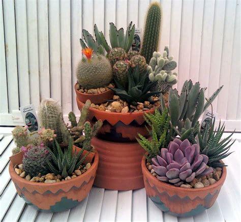 succulent pots for sale cactus garden crooker s plant master