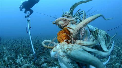 imagenes de la vida buena la pesca que consume la vida marina en montecristi youtube