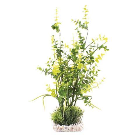 Eukalyptus Pflanze Kaufen by Eukalyptus Pflanze Kaufen Stunning Dehner Gourmet Garten