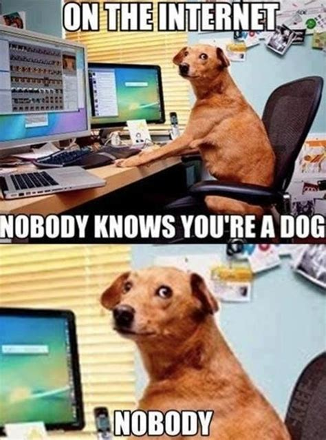Internet Dog Meme - funny compilation on the internet 23 pics