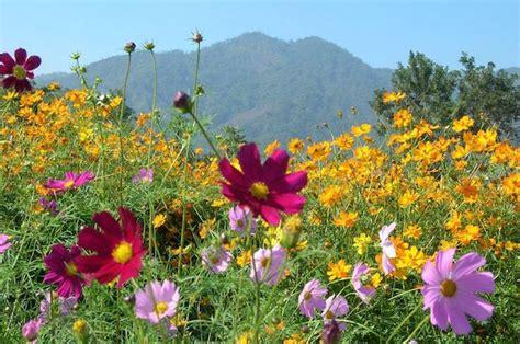semi prato fiorito coltivazione prato fiorito idee green