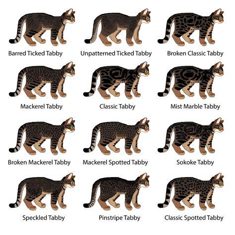 cat pattern types cat genetics guide tabby patterns weasyl