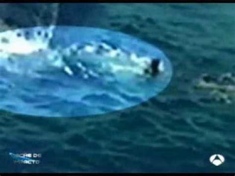 ataque mortal de un gran tiburon blanco ataques de tiburones a humanos taringa