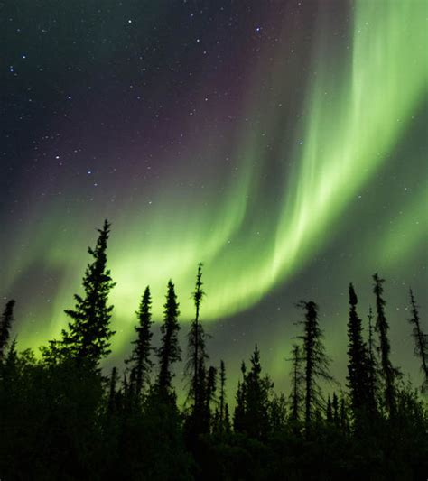 northern lights grow supply northern farm institute working towards the