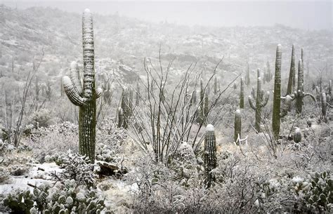 desert snow a desert snow day photograph by saija lehtonen