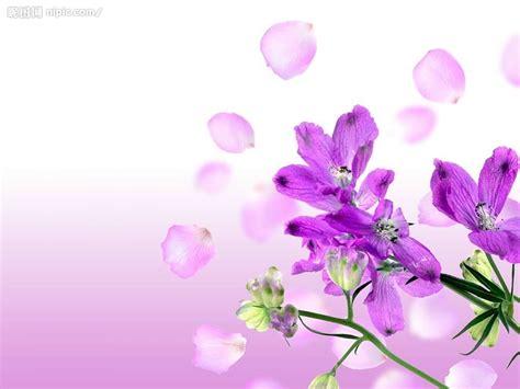 wallpaper bunga violet 紫色的花摄影图 图片素材 其他 摄影图库 昵图网nipic com