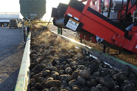 Manitoba Records Free Manitoba Breaks Spud Harvest Record For Second Year Spud Smart