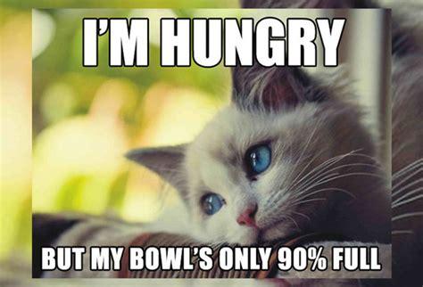 Sad Cat Meme - 18 hilarious sad cat problems that might explain why your