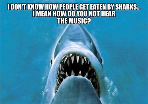 Sad Shark Meme - how do people get eaten by sharks meme