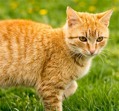 should i let my eat grass microchipping cats kittens saves lives petsmart