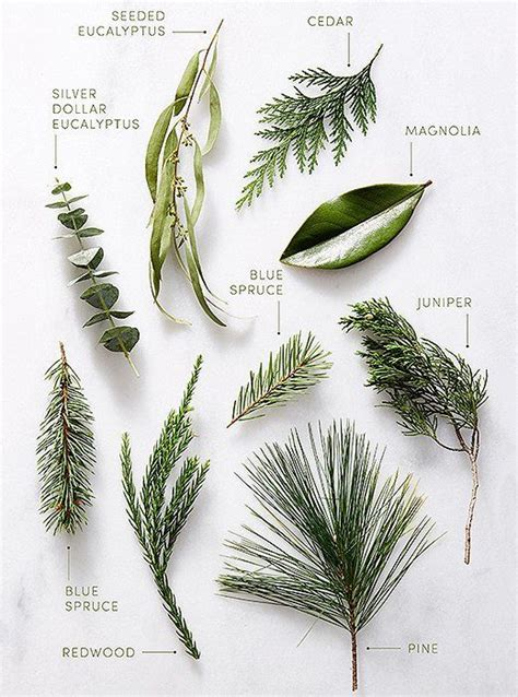 best 25 pine ideas on the 25 best pine ideas on pine cone jewelry