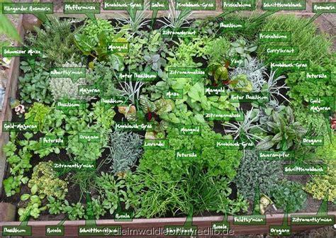 welche pflanzen im garten aus dem wald 187 kr 228 utergarten