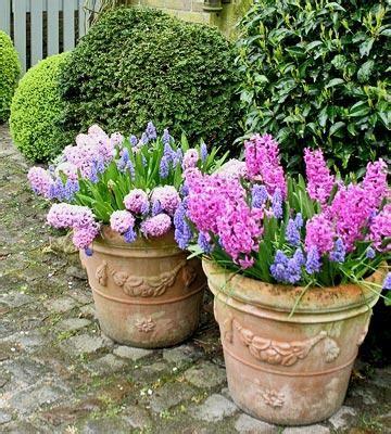 piante primaverili fiorite il giardino in fioriera 14 le composizioni di piante