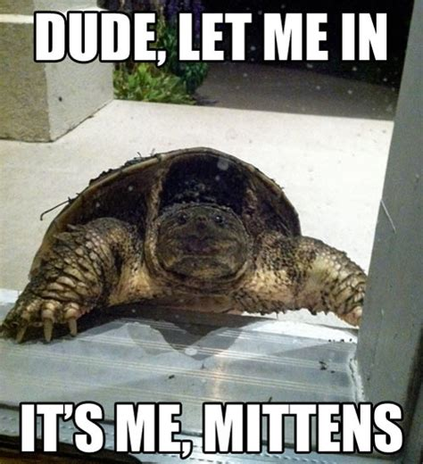 Turtle Memes - come on dude it s me