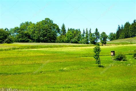 imagenes verdes hermosas hermosas praderas verdes en paisaje fotos de stock