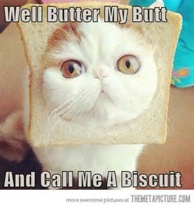 Cat Toast Meme - funny cat toast bread face on imgfave