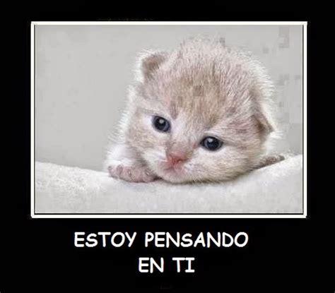 fotos muy bonitas de gatos 45 im 225 genes de gatitos tiernos con frases y mensajes