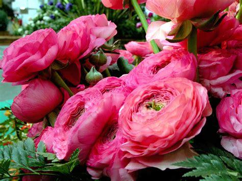 fiori russia fiori il distretto floroviviaistico ponente vola in