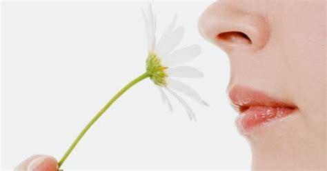imagenes de olores fuertes sentido del olfato el sentido del olfato