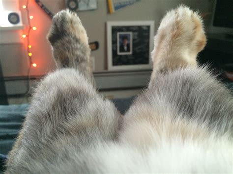dogs or legs dogs or legs rabbits
