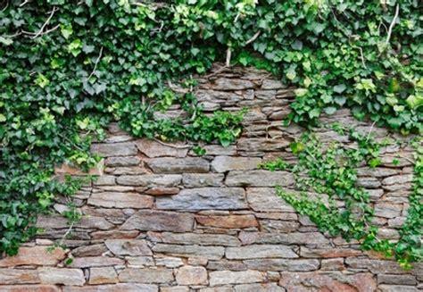 sichtschutzmauer garten sichtschutz mauer aus pflanzsteinen beste garten ideen