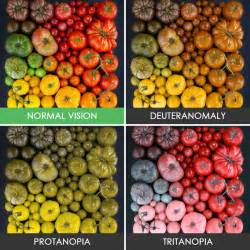 what is it like to be color blind you ll be surprised how with color blindness see