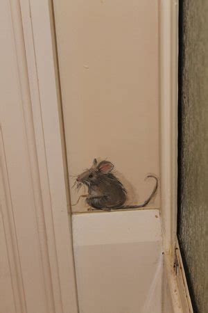 mice in bathroom mouse painted in bathroom picture of the moffat house peterborough tripadvisor